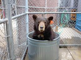 Twitter Campaign Saves Celebrity Bear, Meatball